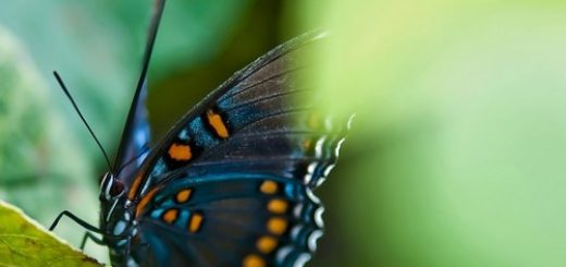 butterfly_quotes8